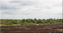 N2120 : Bogland at Derrymore by Eric Jones