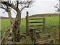 SN6308 : Sticl Ynys ger Cathan stile by Alan Richards