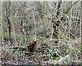 SJ9494 : Gower Hey Brook by Gerald England