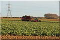TF0153 : Harvesting sugar beet by Richard Croft