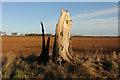 TF0154 : Tree stump by Richard Croft