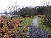H5776 : Path along Loughmacrory Lough by Kenneth  Allen