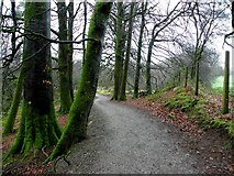 H5776 : Path and mossy trees, Loughmacrory by Kenneth  Allen