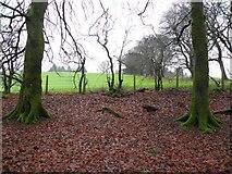 H5776 : Fallen leaves, Loughmacrory by Kenneth  Allen