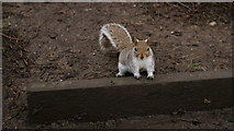 """TR1457 : """"Buddy, can you spare a peanut?"""" by Peter Trimming"""