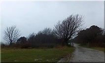 SY3893 : Track on Stonebarrow Hill by David Smith