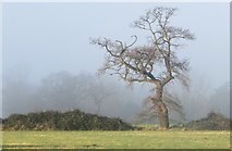 TL8063 : Early morning mist at Little Saxham by Bob Jones