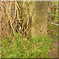 SK6233 : Gatepost with bench mark, Clipston Lane by Alan Murray-Rust