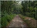 SX0657 : Luxulyan Valley Trail by Chris Gunns