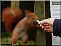 TQ3643 : At the Sign of the 'Red Squirrel' by Peter Trimming