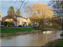 TF1409 : Willow on the bank of the River Welland by Richard Humphrey
