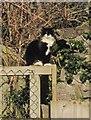 SX8572 : Cat, Sunnybank, Newton Abbot by Derek Harper