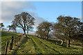 NZ0636 : Weardale Way heading west by Trevor Littlewood