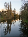 TQ2077 : View from the Palladian Bridge, Chiswick House Gardens, in January by Stefan Czapski