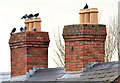 J4273 : Chimneys and pigeons, Dundonald by Albert Bridge