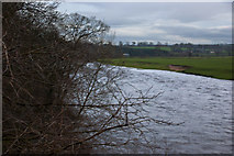 NY4756 : The River Eden by Ian Greig
