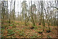 SU8430 : Woodland, Stanley Common by N Chadwick