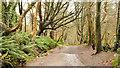 J3977 : Path, Redburn, Holywood (3) by Albert Bridge