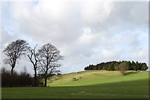 SK2369 : Moatless Plantation on the Chatsworth Estate by Neil Theasby