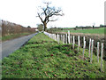 TM3687 : New hedge beside Low Road by Evelyn Simak