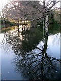 J3731 : Trees reflected in flood water at Islands Park, Newcastle by Eric Jones