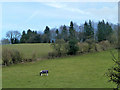 SU7386 : Horse in field by Robin Webster