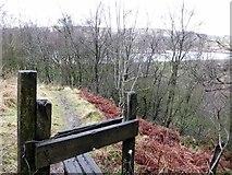 SD6715 : Path through Hill Top Wood by Philip Platt