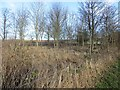 NU0435 : Bootjack Wood by Richard Webb