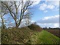 TQ9327 : Field edge near Stone-in-Oxney by Marathon