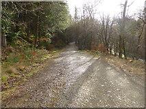SH7326 : Forestry road beside the Afon Mawddach by David Medcalf