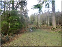SU2609 : Acres Down, forestry track by Mike Faherty