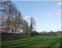 TQ0487 : Trees and wall, Buckinghamshire Golf Club, Denham by Stefan Czapski