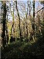 SX8854 : Long Wood by Derek Harper