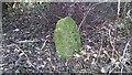 NZ7015 : Quaker Gravestone in the undergrowth by Matthew Hatton