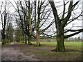 SJ7481 : Avenue of trees, Tatton Park by Christine Johnstone