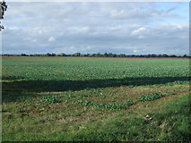 TF1012 : Crop field off King Street Roman Road by JThomas