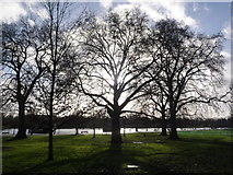 TQ2780 : London: some Hyde Park trees by Chris Downer