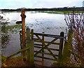 SK1715 : Flooded Footpath by Des Blenkinsopp