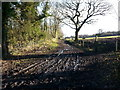 NZ0862 : Track at Eltringham showing footpath heading off to Beaumont Wood by Clive Nicholson