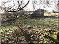 SJ2257 : Ruin near the bridleway by Maggie Cox