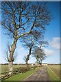 NZ3042 : Track to Sherburn Grange by Paul Harrop