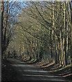 TL4346 : Thriplow: Farm Lane by John Sutton