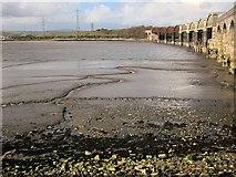 SX4561 : Rivulet across the mud, Tavy Bridge by Derek Harper