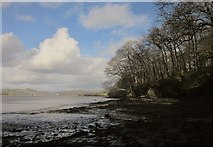 SX4561 : Warleigh Wood and the Tavy estuary by Derek Harper