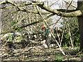 SP2965 : Fallen poplars, Emscote Gardens, Warwick  by Robin Stott