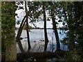 SP6406 : Oxfordshire Everglades by Rob Farrow