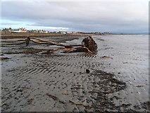 NS3230 : Storm debris on Troon South sands by Gordon Brown