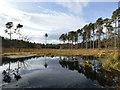 SJ5370 : Black Lake, Delamere by Clive Giddis