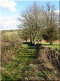 SP1726 : Green lane to Bowl's Farm by Philip Jeffrey