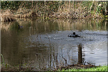 TQ3499 : Lake, Myddelton House, Enfield, Middlesex by Christine Matthews